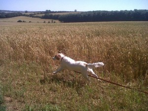 Banbury Dog walking and boarding